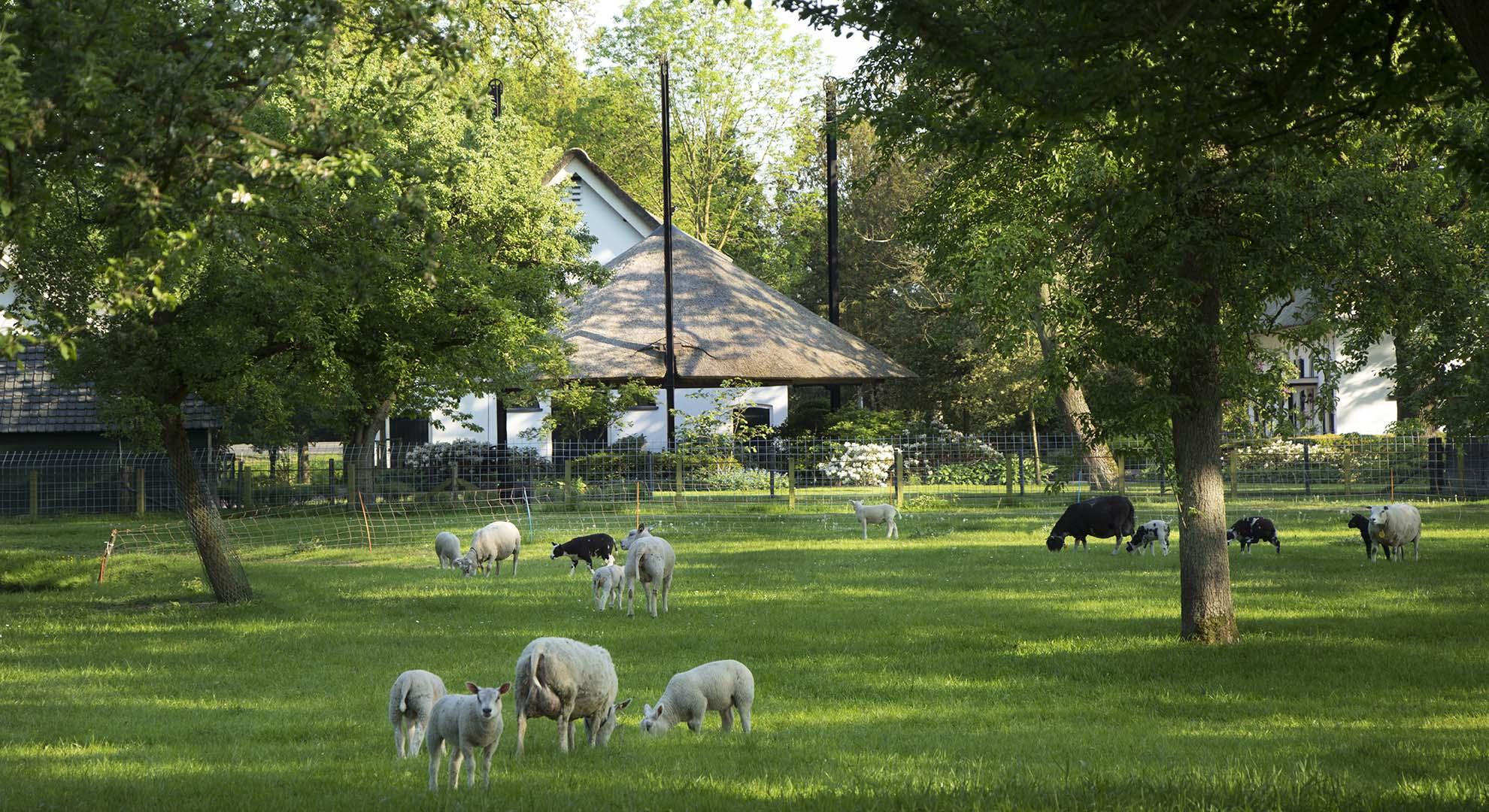 Boerderijtuin bij landgoed Woerden - Foto 7