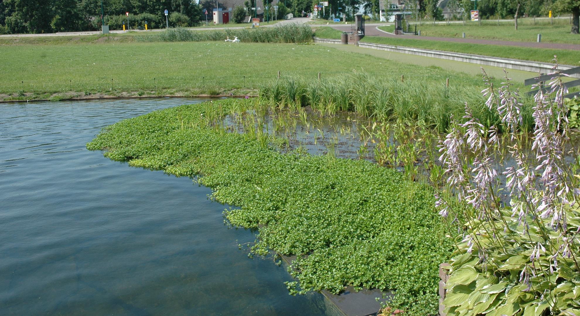 Boerderijtuin met zwemvijver - Foto 7