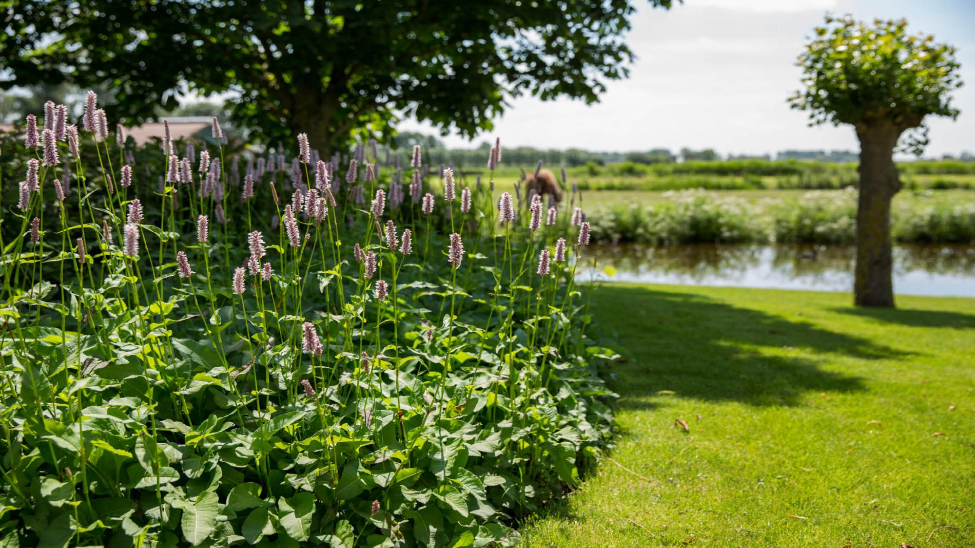 Landelijke tuin in de polder - Foto 2
