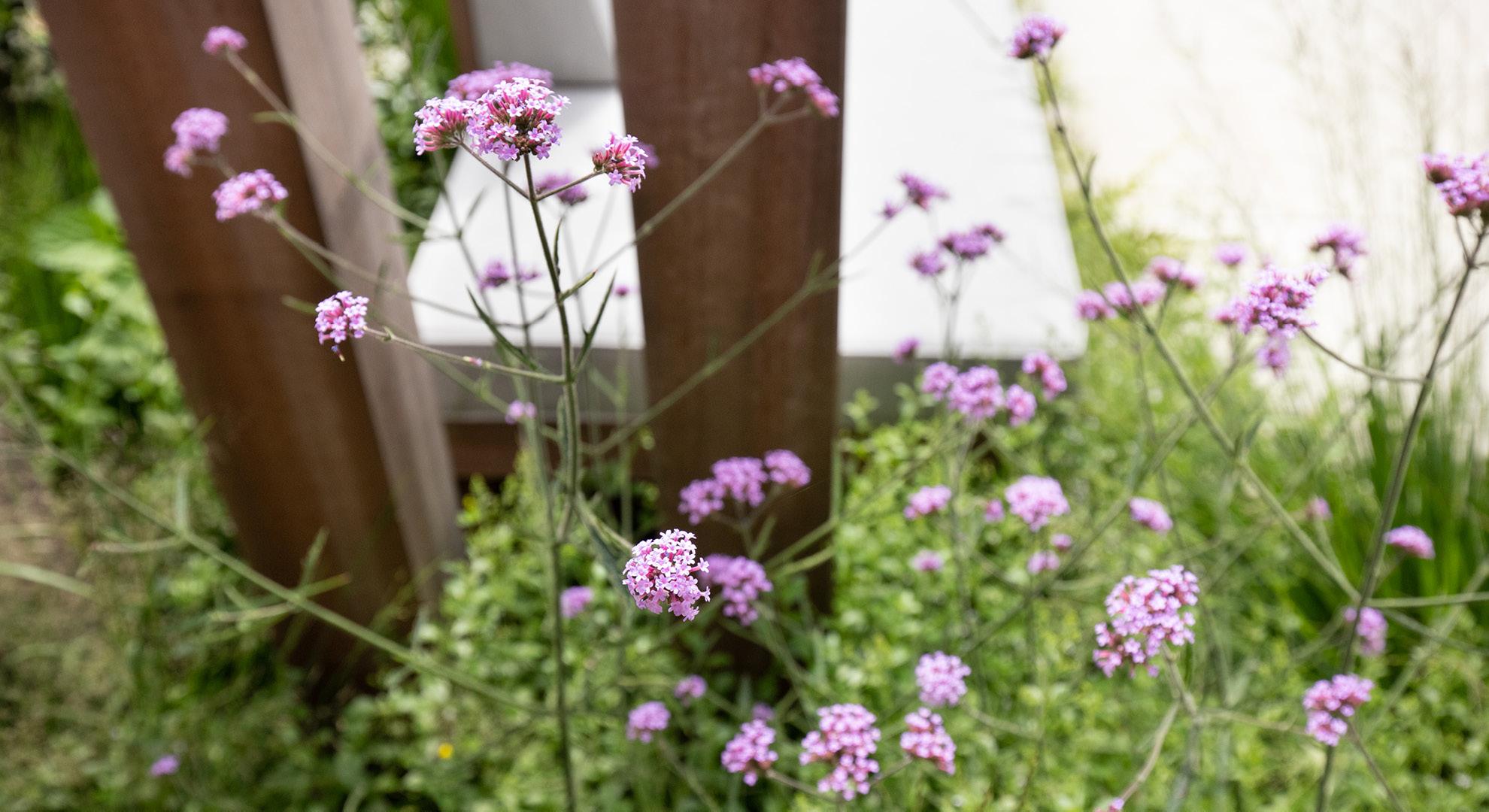 Moderne onderhoudsvriendelijke tuin met buitenkeuken - Foto 8