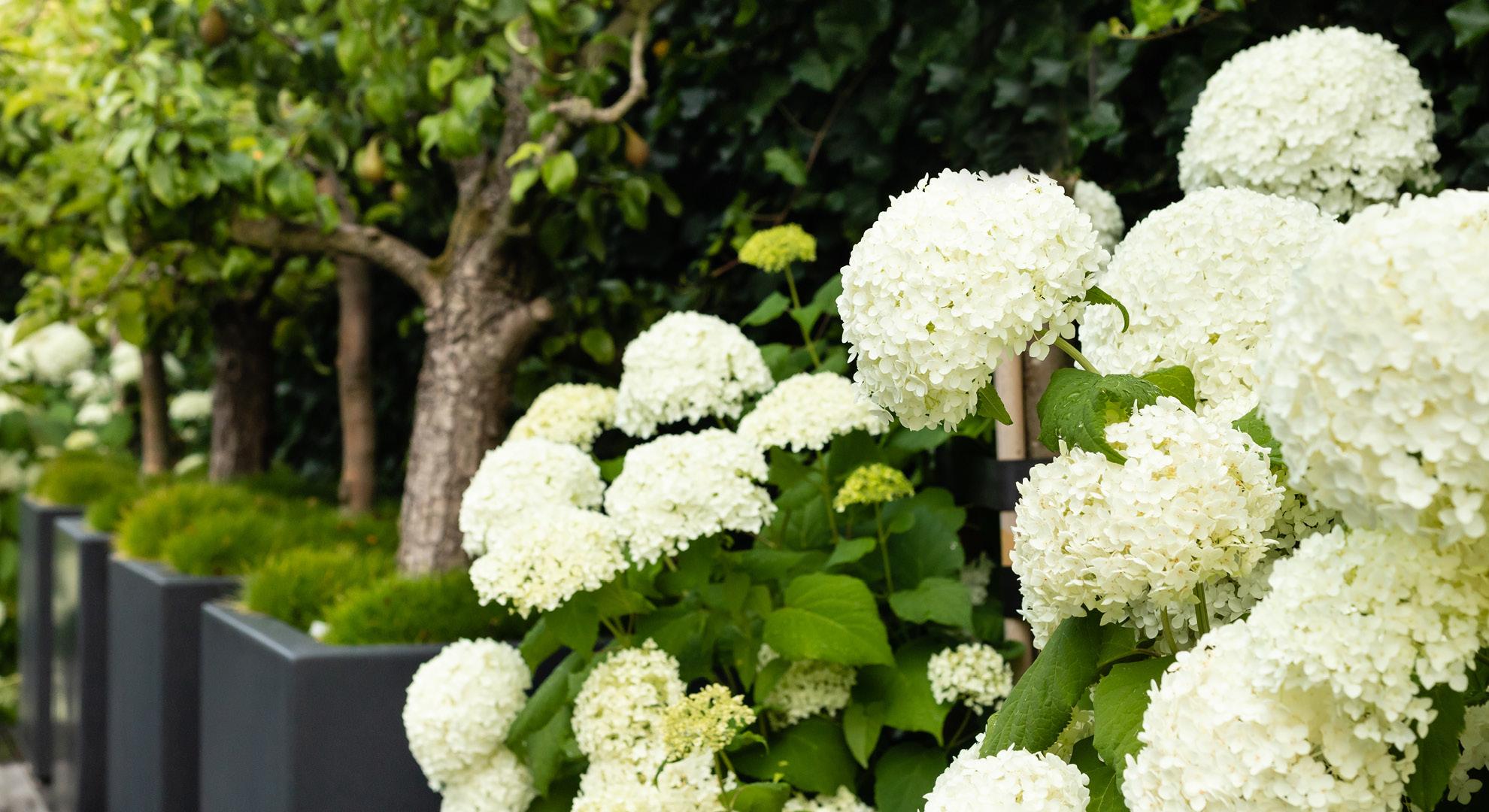 Moderne tuin met spiegelvijver en buitenhaard - Foto 6