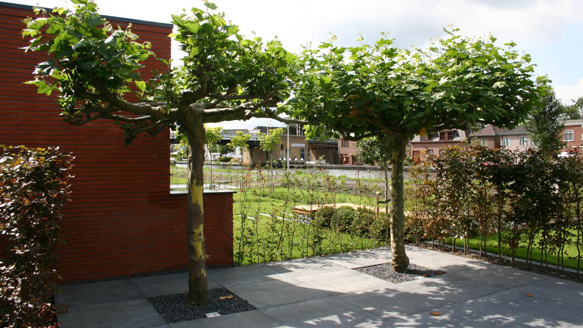 Moderne onderhoudsvriendelijke tuin  - Foto 7