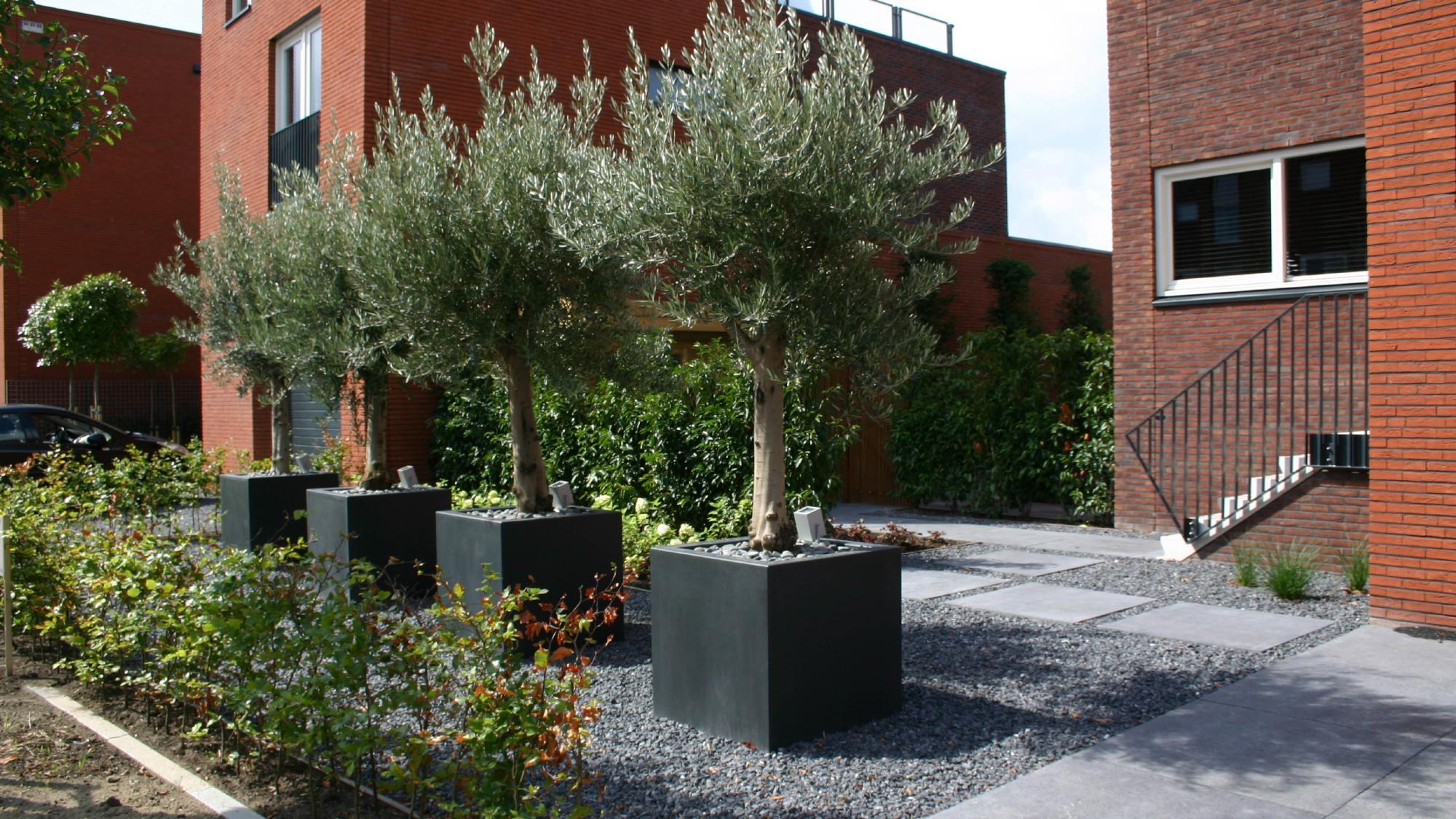 Moderne onderhoudsvriendelijke tuin  - Foto 1