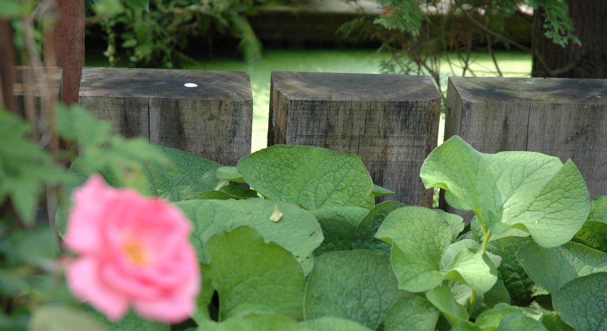 Natuurlijke achtertuin met waterornament - Foto 7