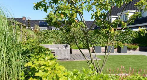 Groene daktuin in Utrecht