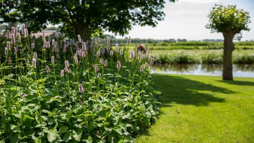 Landelijke tuin in de polder