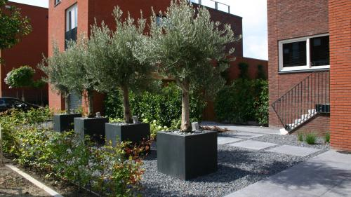 Moderne onderhoudsvriendelijke tuin